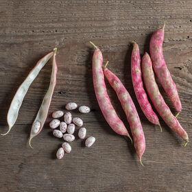 Flambo Fresh Shell Beans
