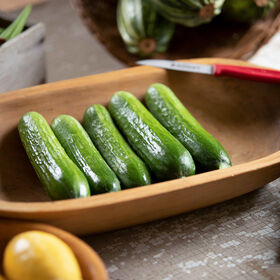 Picolino Slicing Cucumbers