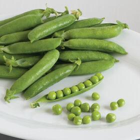 Sienna Shelling Peas