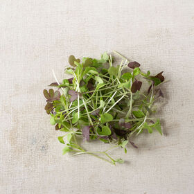 Spicy Micro Mix Micro Green Mixes