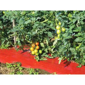 SRM Red Mulch – 4' x 3000' Solid Plastic (Polyethylene) Mulch
