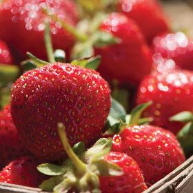 德班草莓插头