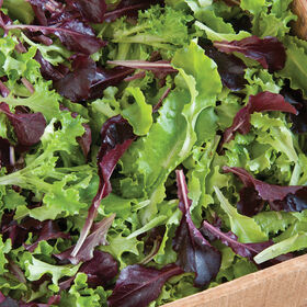Five Star Greenhouse Lettuce Mix