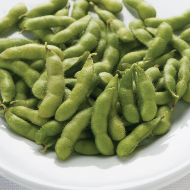 Tohya Soybeans