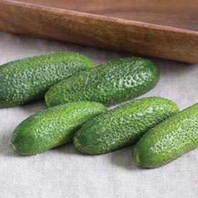 Adam Gherkin Pickling Cucumbers