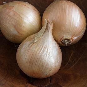 Ailsa Craig Full-Size Onions