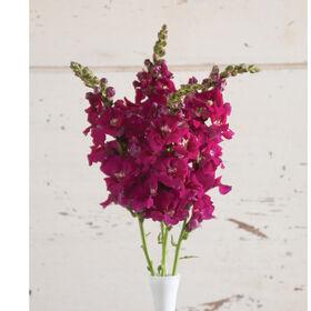 Chantilly Purple