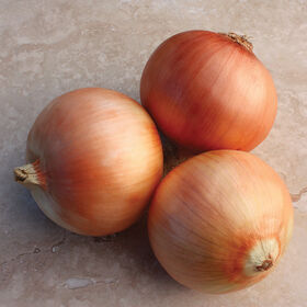 Great Western Full-Size Onions