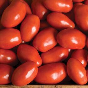 派萨诺番茄酱