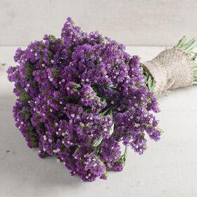 Seeker Purple Statice