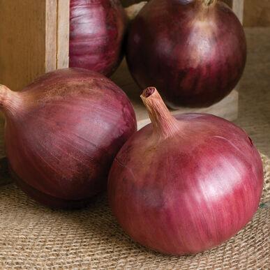 Cabernet Onions