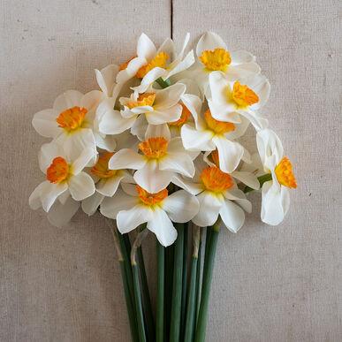 Barrett Browning Narcissus