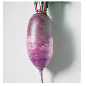 Bora King Daikon Radishes