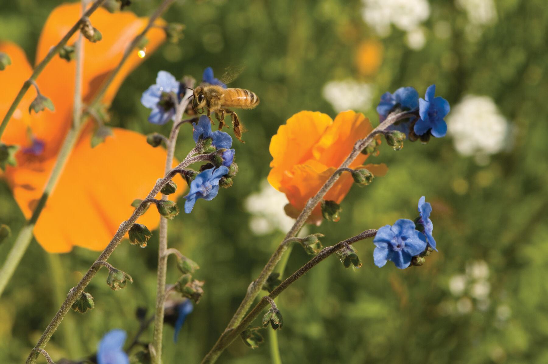 ¿Más que proteína? Interacciones abeja-flor y efectos de los regímenes de perturbación revelados por el polen raro en los nidos de abejas | SpringerLink