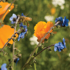 蜜蜂饲料混合野花混合
