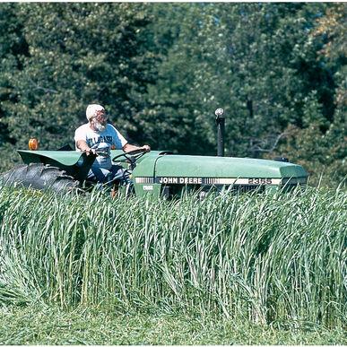 Sudangrass (Piper)