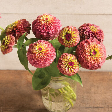 Queen Red Lime - Zinnia Seed | Johnny's Selected Seeds on