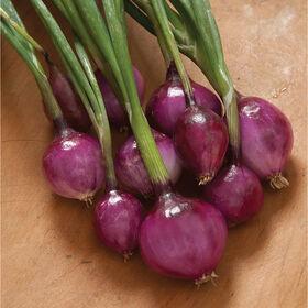 紫色迷你洋葱