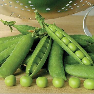 Premium Shelling Peas