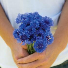 Florist Blue Boy