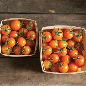 太阳金樱桃西红柿