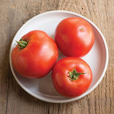Big Beef Beefsteak Tomatoes
