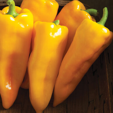 Escamillo Sweet Peppers