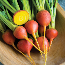 Touchstone Gold Round Beets
