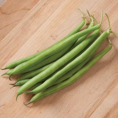 Cosmos Bush Beans