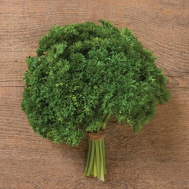 Darki Leaf Parsley