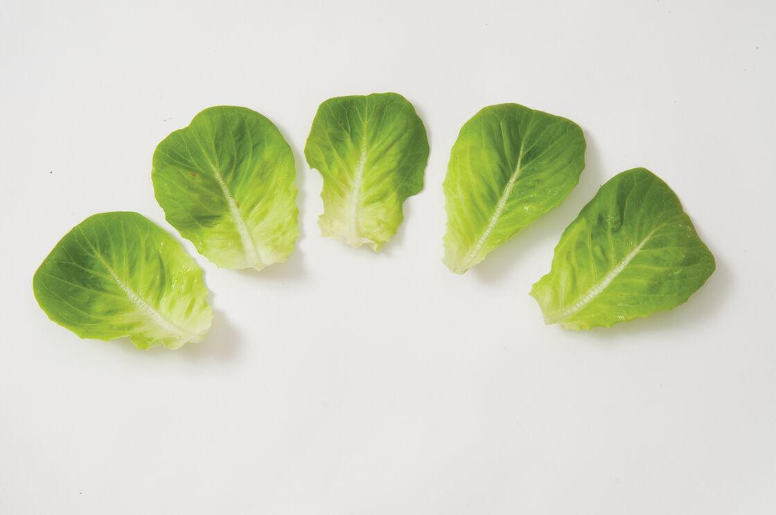 salanova174 green butter lettuce seed johnnys selected