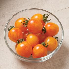 日出大黄蜂特产西红柿