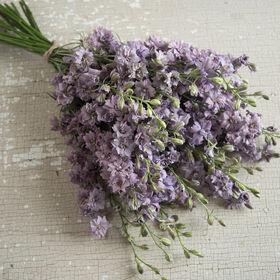 Misty Lavender Larkspur