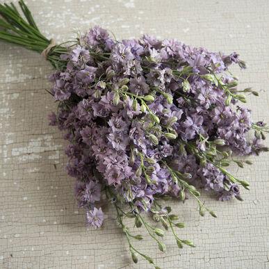 misty lavender larkspur seed johnny s selected seeds