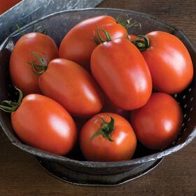 李子酱番茄