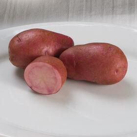 阿迪朗达克红土豆