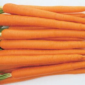 Sugarsnax 54主要作物胡萝卜