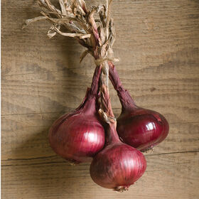 Red Marble Onion Plants