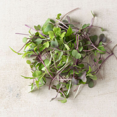 Mild Micro Mix Microgreen Mixes
