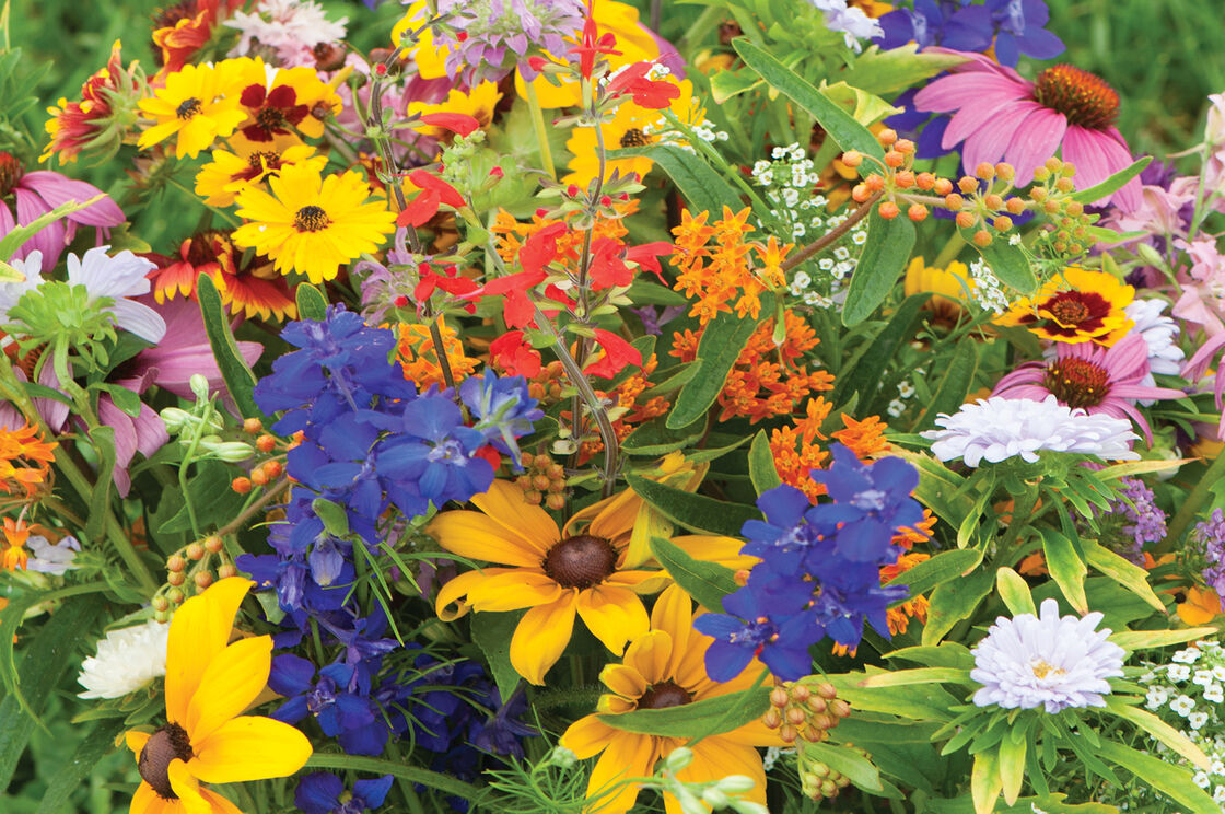 Butterfly Hummingbird Mix Flower Seed Johnnys Selected Seeds