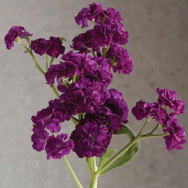 Quartet Purple Stock