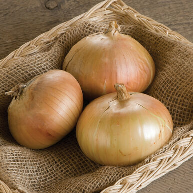 Bridger Full-Size Onions