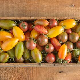 工匠番茄™收集专业西红柿