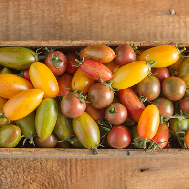 Artisan Tomato™ Collection Specialty Tomatoes