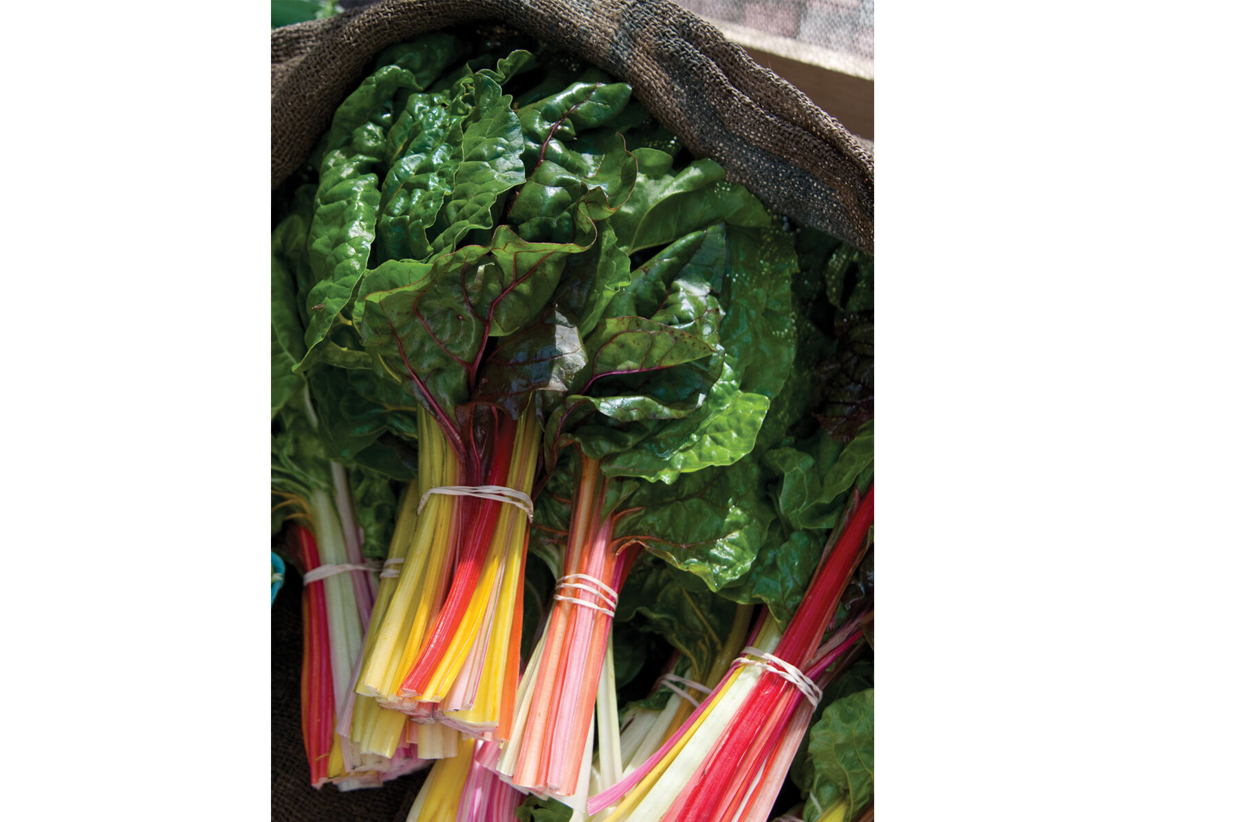 Swiss chard days to maturity