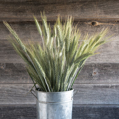 Silver Tip Grasses, Ornamental