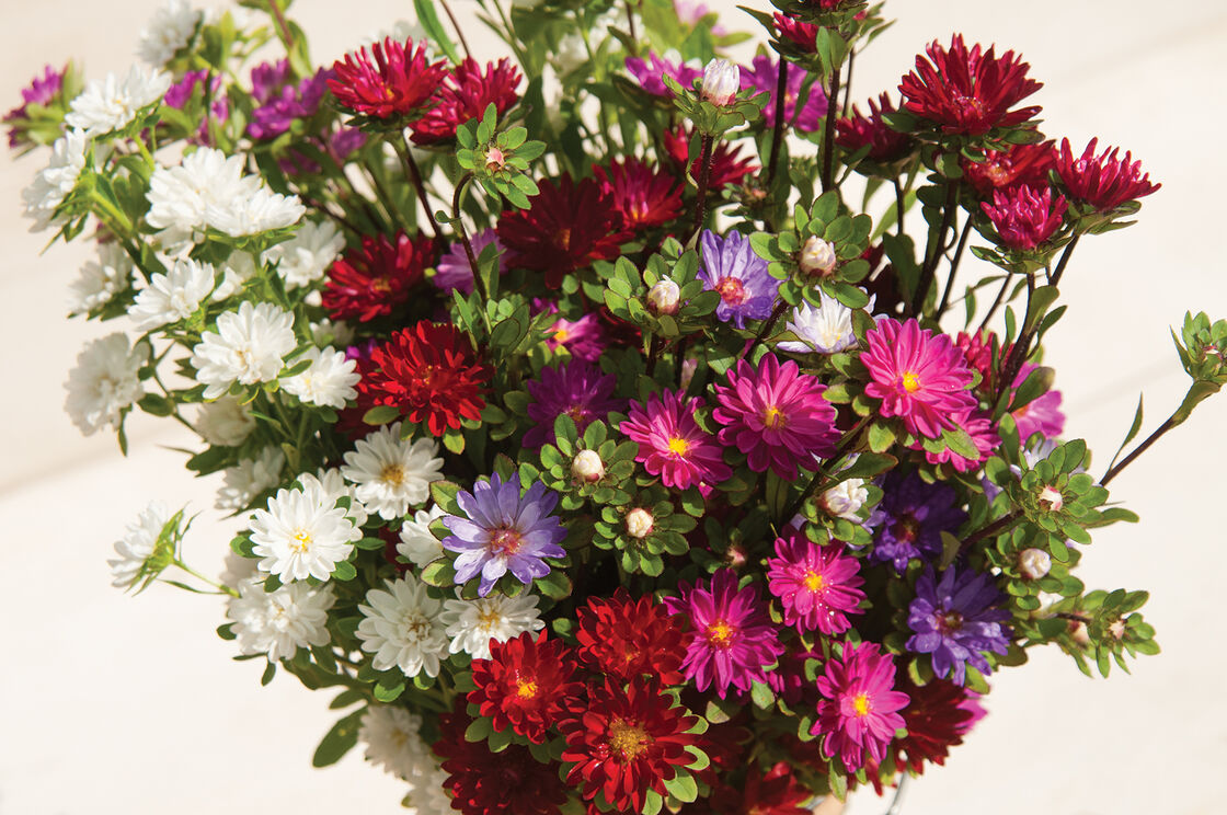 Serenade mix china aster seed johnnys selected seeds view full size image izmirmasajfo