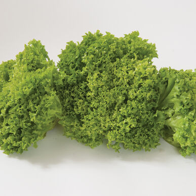 Salanova® Green Incised Salanova® Lettuce
