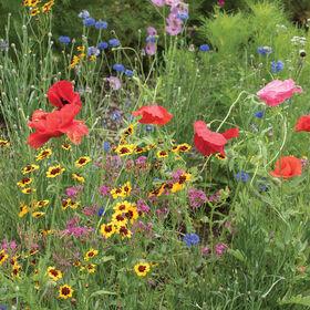 北极光野花和混合