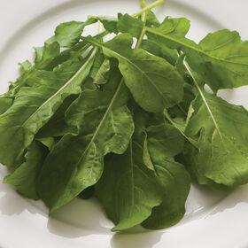 芝麻菜(标准)芝麻菜(火箭)